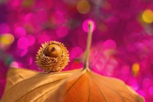 Есенски бајки – фотографии за убав ден