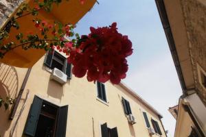 Херцег Нови – градот на цвеќето