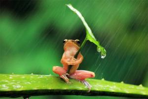Приказна за една необична жаба