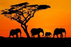 Боите на Африка