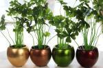 Фенг шуи: Растенија кои го чистат домот од отровите