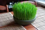 Декоративна пченица за Божиќ