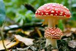 Со печурки до здравје