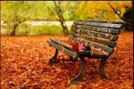 Подгответе го организмот за есента