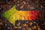 Виножита од есенски бои