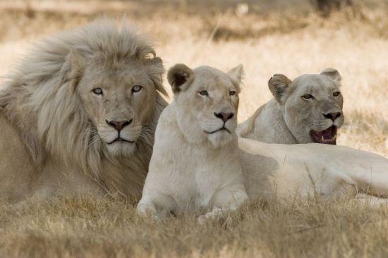 albino lalovi, albino zivotni, албино животни