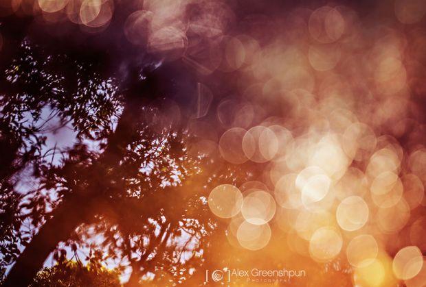 Есенски бајки фотографии за убав ден, фотограф, Алекс Гриншпан, есен, природа, бајка, магија, esen, fotografii, magija, bajka, priroda