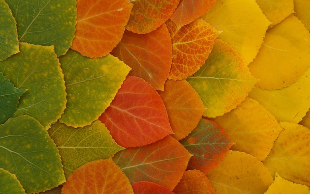 Виножита од есенски бои, Vinozita od esenski boi, esen, zanimlivost, ubavi nesta, boi, vinozito, zunica, esenski boi, fall, autumn, есен, занимливост, убави нешта, бои, виножито, ѕуница, есенски бои