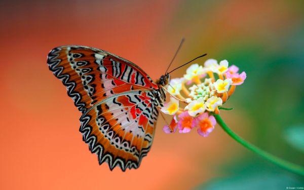 Пеперутки, јагниња, зајачиња... велигденски симболи, значењето на велигденските симболи, велигденско зајаче, велигденско јајце, ристос воскресе, veligden, veligdenski jajca, hristos voskrese