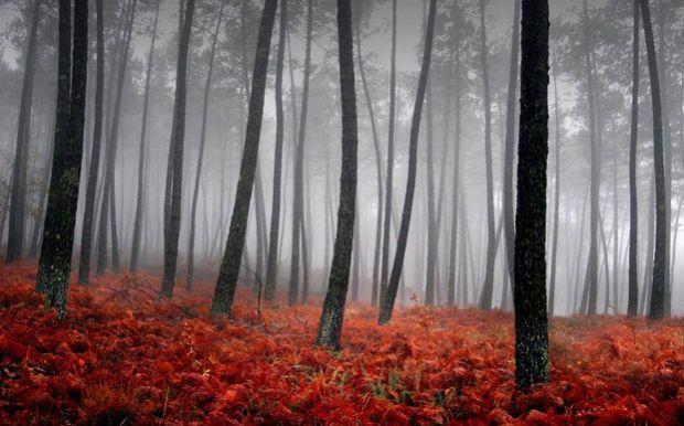 prekrasnite boi na esenta, esen, прекрасните бои на есента, есен