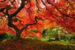 Прекрасните бои на есента